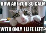 funny-cats-with-9-lives